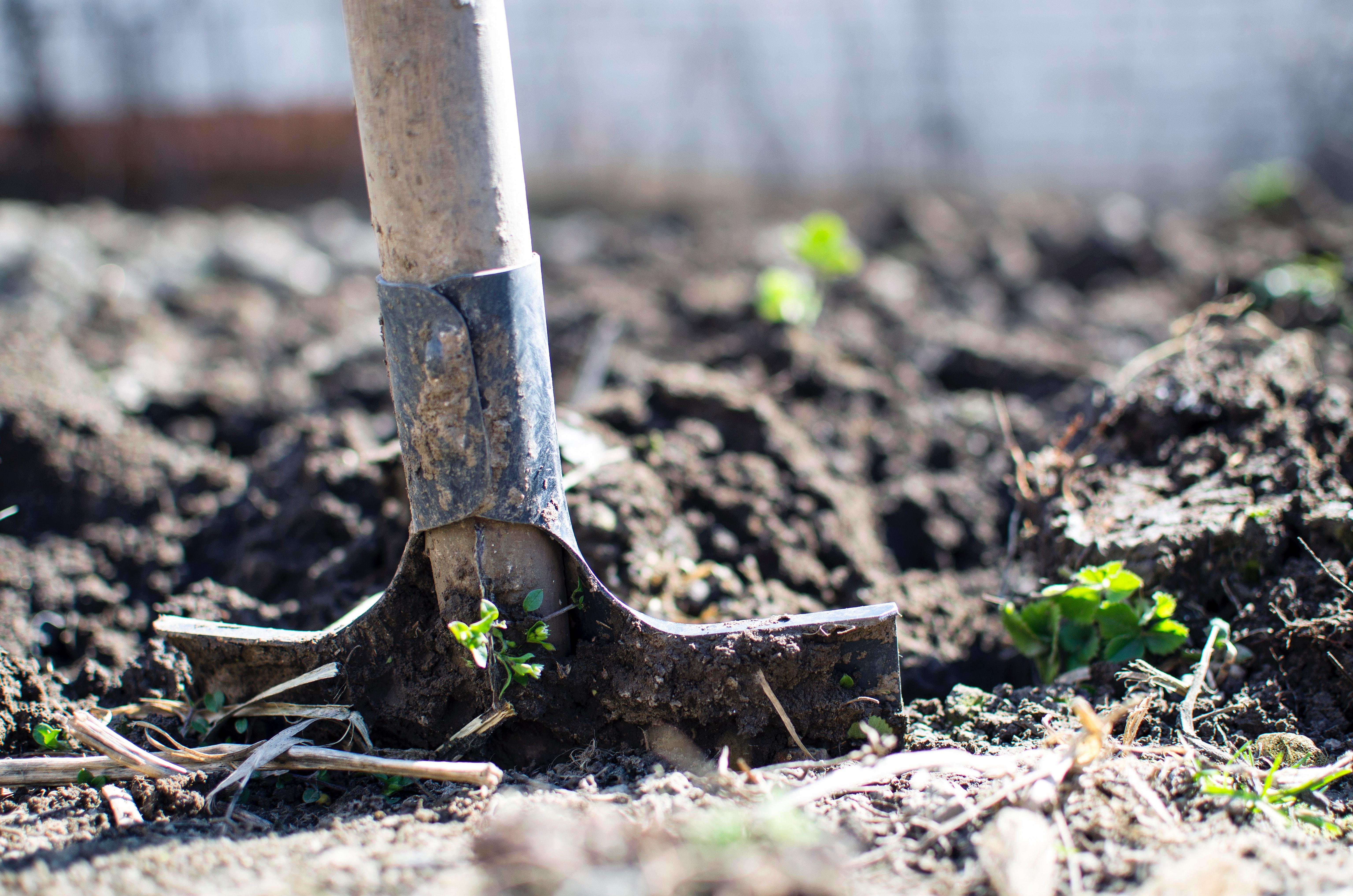 shovel going into soil