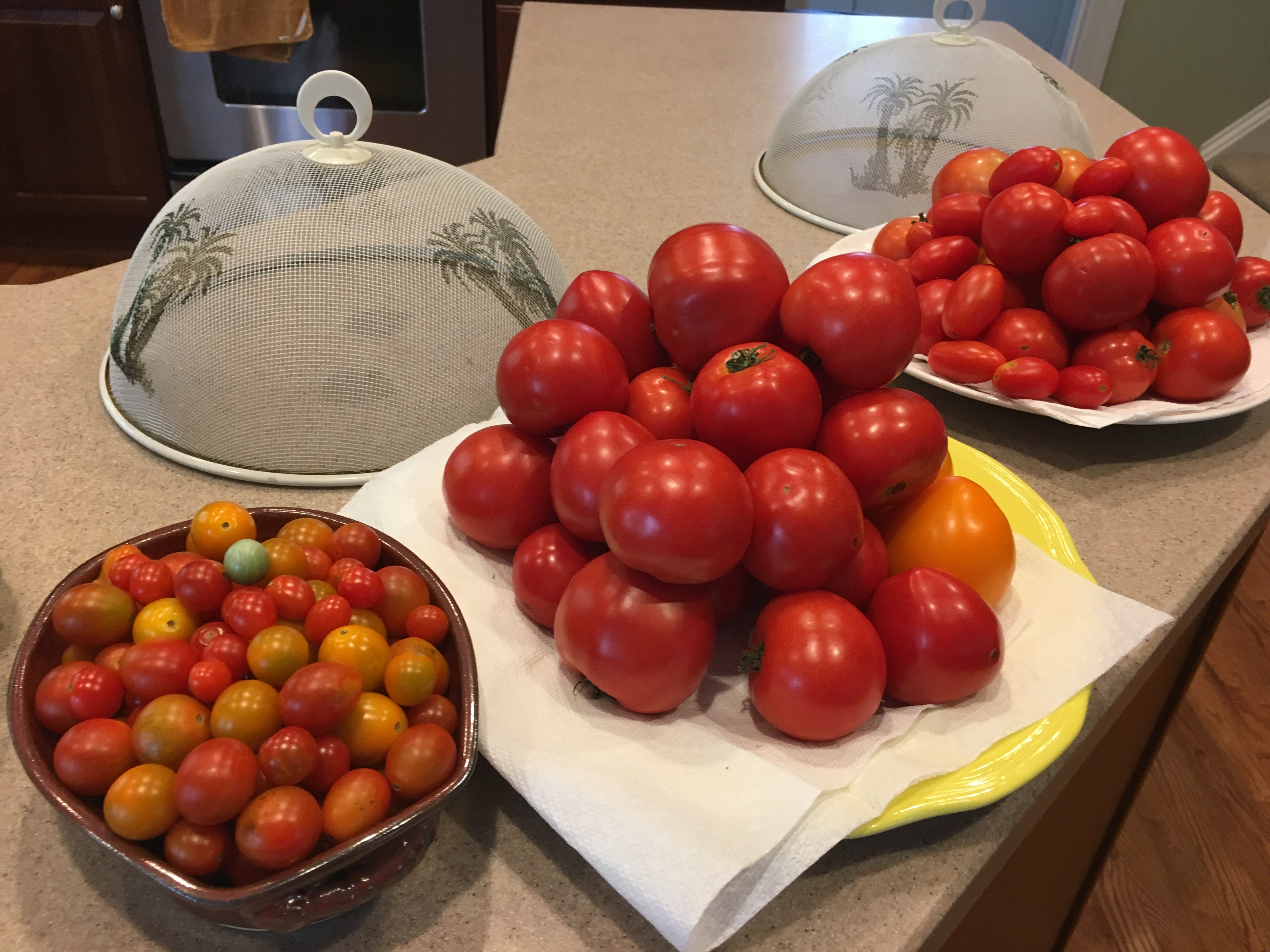 three plates full of tomatoes of various sizes and types