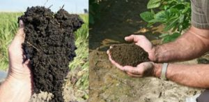 Examples of granular soil structure (looks like chocolate cookie crumbs) in topsoil.