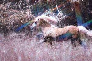 Cover photo for August 2020 NC 4-H Horse Program Newsletter
