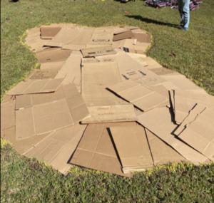 master gardeners add cardboard to suppress weeds
